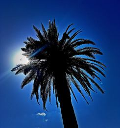 palm square sun